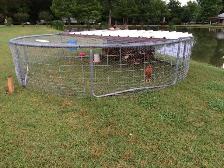 Trampoline chicken coop Home/garden/farm