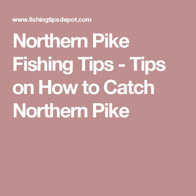 Northern Pike Fishing Tips - Tips on How to Catch Northern Pike