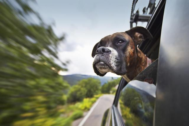 Pet taxi services coordinate the transportation of pets to grooming or vet appointments.