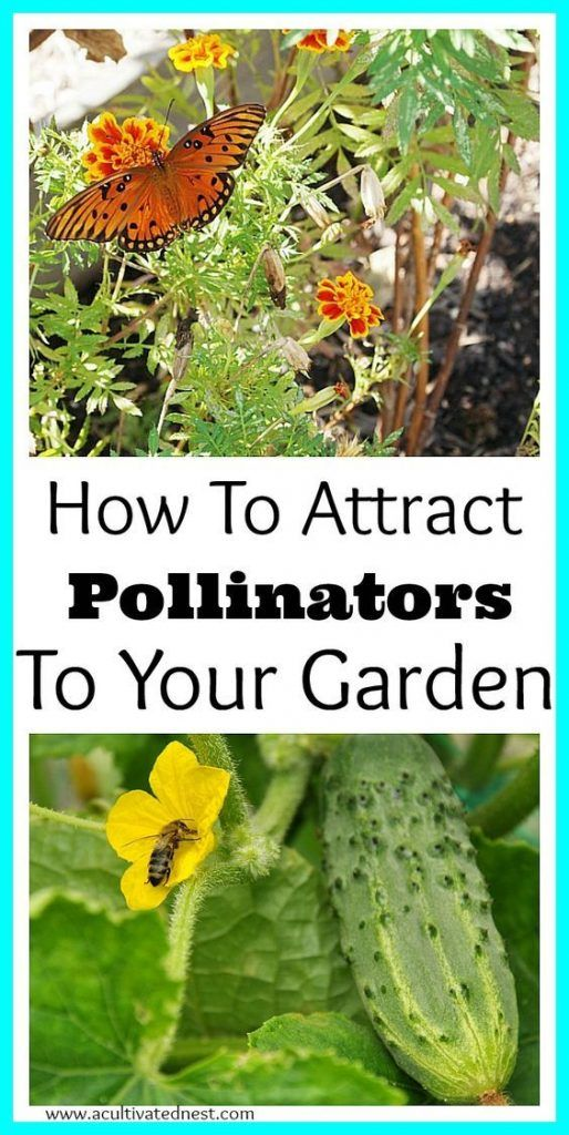 How To Attract Pollinators To Your Vegetable Garden