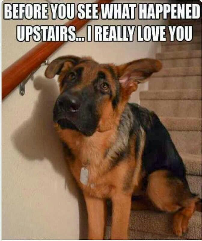 The look most rescue dogs have and you know to proceed upstairs with caution!