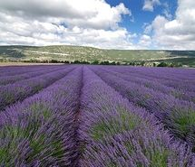 countryside, field, france, landscape, lavender, provence