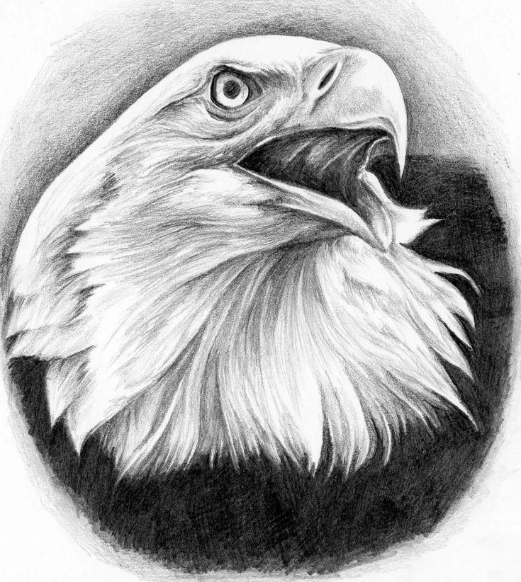 Орел картинки как нарисовать