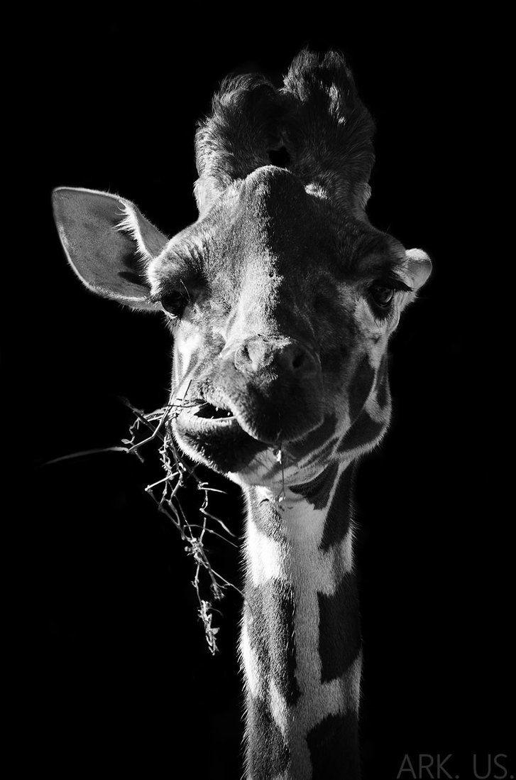 Funny Giraffe by Arkus83 on DeviantArt