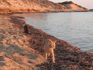 I Luoghi del Cuore: A tu per tu con i comitati: Spiaggia e colonia felina di Su Pallosu