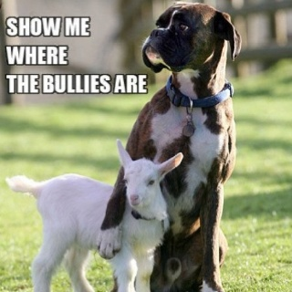 Friends.: Animals, Friends, Dogs, Pet, Goat, Funny, Boxers, Things
