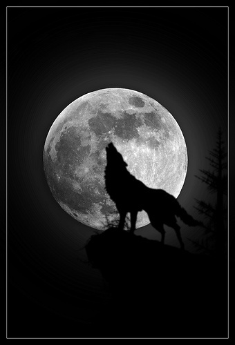 Werewolves in Suburbia - Creepypasta Wiki