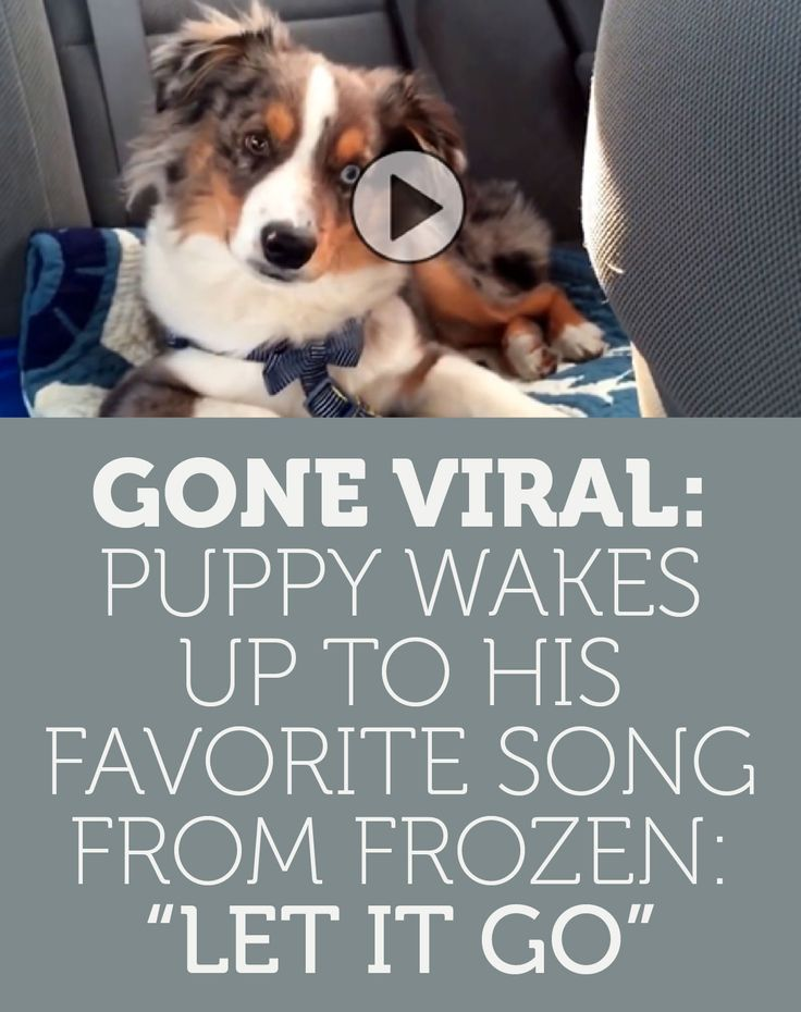 GONE VIRAL: Wakes Up To His FAVORITE Song From Frozen Let It Go!