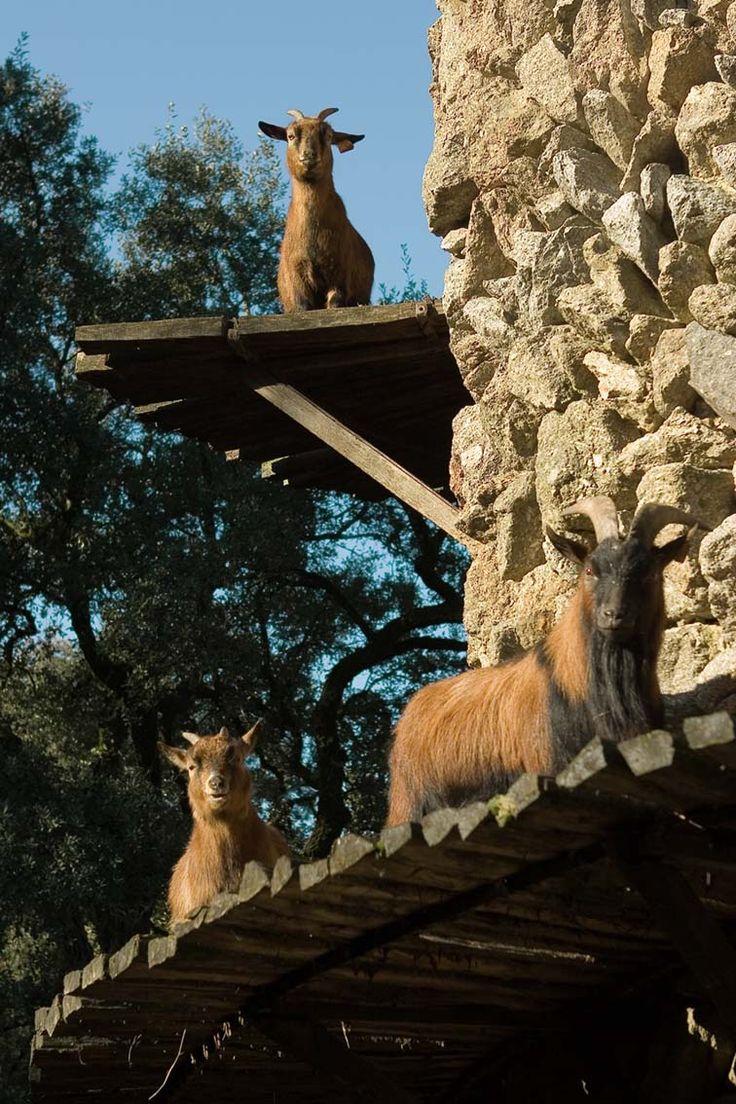 Torre das Cabras - Quinta da Aveleda