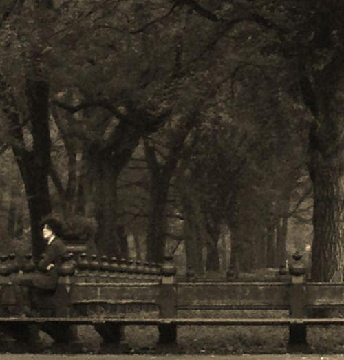 LP in Central Park. Fan photo by Joe Niland.
