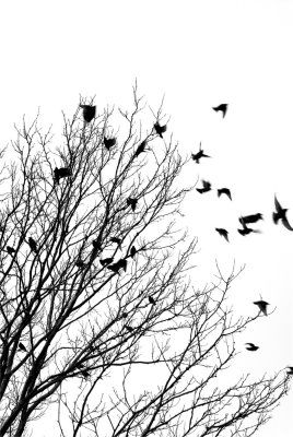 pajaros volando blanco y negro - Buscar con Google