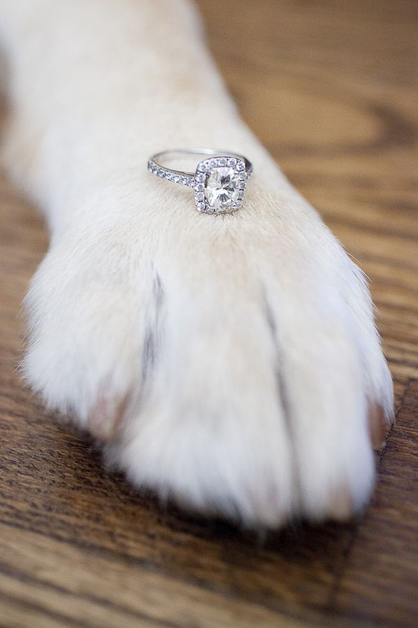 Lora Mae Photography | Engagement Photos with Dogs