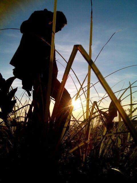 The Pro. 070516. Sunrise Prau Mountain. Uuuuww so cuuuuuutteeeee