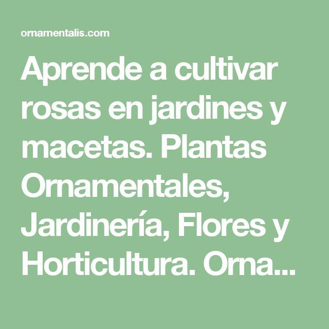 Aprende a cultivar rosas en jardines y macetas. Plantas Ornamentales, Jardinería, Flores y Horticultura. Ornamentalis