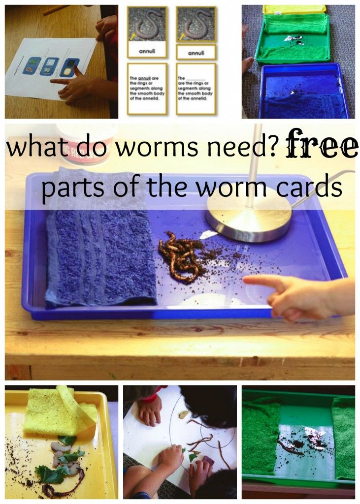 Free Parts of the Worm Cards and Worm Activities via Montessori Works