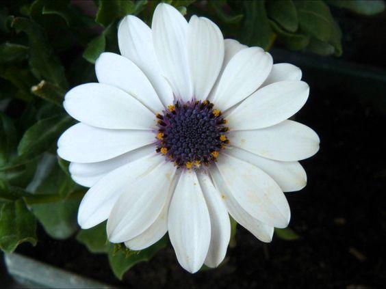* ▶ Bloemenmeditatie voor kinderen...lekker even tot rust komen...