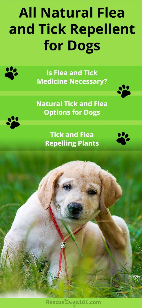 Natural Tick And Flea Prevention For Dogs Tick Repellent For