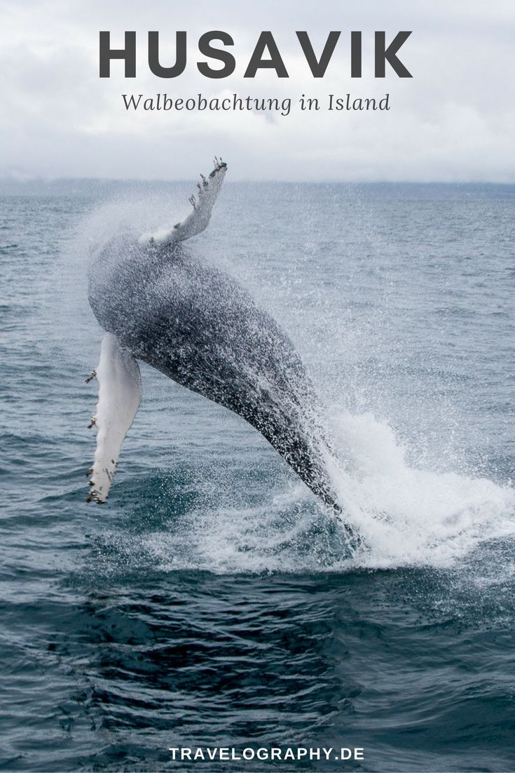 Husavik: Whale Watching in Island