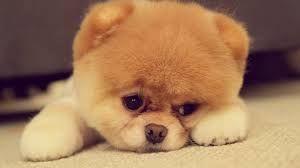 I want that dog