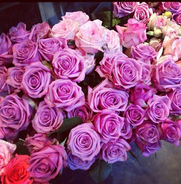 Romantic scene #PiagetRose