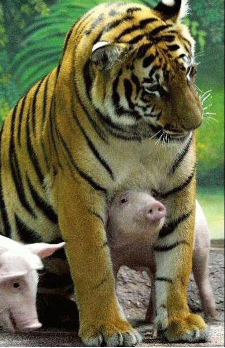 Funny and Strange Photos of Animals – 25 Pics