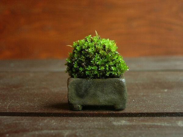 小さな緑のインテリア こけや 2011年06月