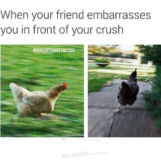 Community Post: 15 Times Life Had You Feeling Like A Running Chicken