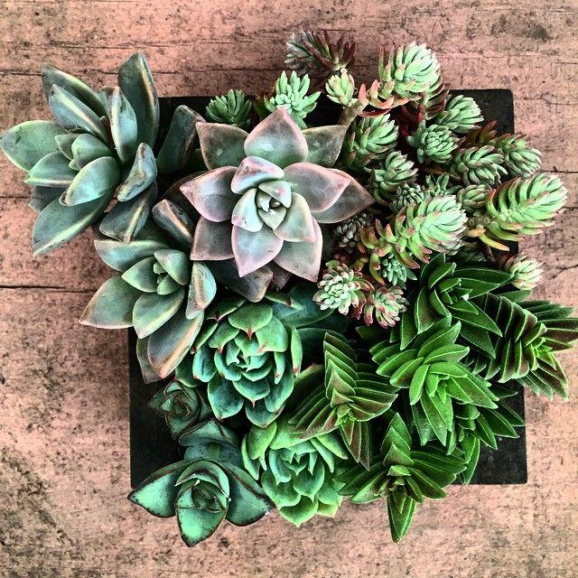 108 mejores im genes de jardin vertical en pinterest for Cuadros verticales baratos