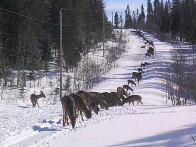 deer partyAnnual, Beautiful Animal, Festivals, Dinner Parties, Deer Hunting Humor, Funny, Deer Gathering, Deer Hunting Seasons, Deer Seasons
