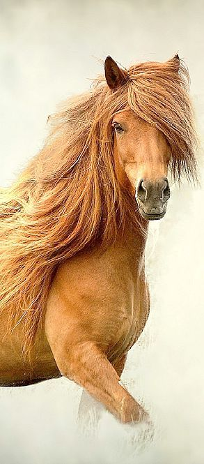 Light chestnut horse with a wild mane.