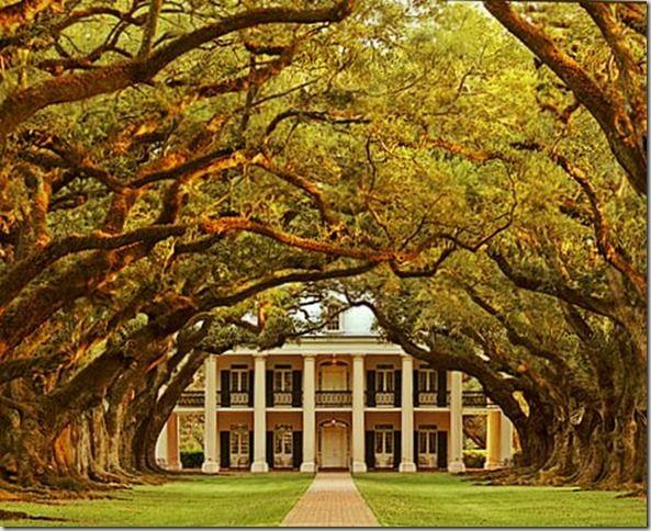 Les 25 meilleures id es de la cat gorie oaks alley sur pinterest maisons coloniales vieilles - Distance plantation arbre maison ...