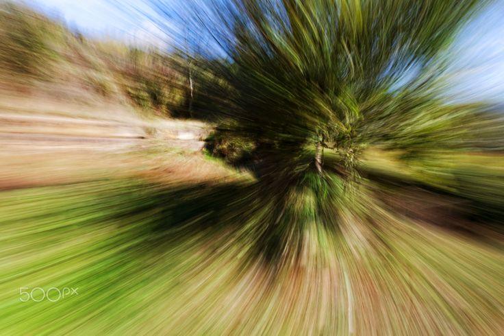 Green in Greece - Zoom effect of trees