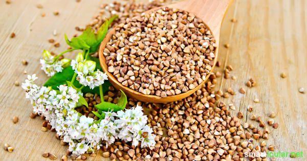 Buchweizen als Heilmittel und wertvoller Baustein einer mineralstoffreichen und glutenfreien Ernährung.