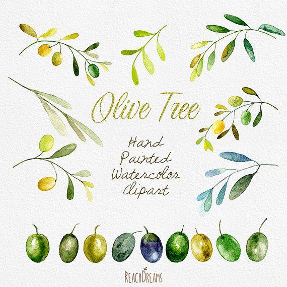 Aquarelle d'olive Clipart. Art peinture d'Olivier à par ReachDreams