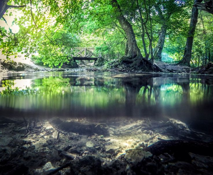 Gopro nature, river, water, forest, tree