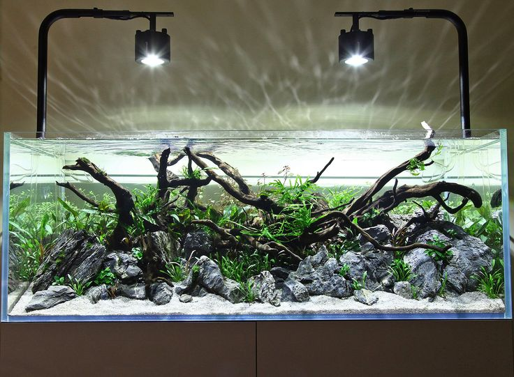 118 best images about aquariums aquascaping on pinterest aquarium stand tropical fish and. Black Bedroom Furniture Sets. Home Design Ideas
