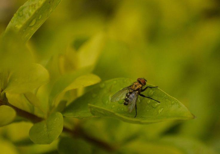 Mis fotografías en http://www.vidasabatica.com/p/fotografia.html?m=1 #VidaSabatica #Fotografia #FotografiaDeNaturaleza #Nikon #Photo