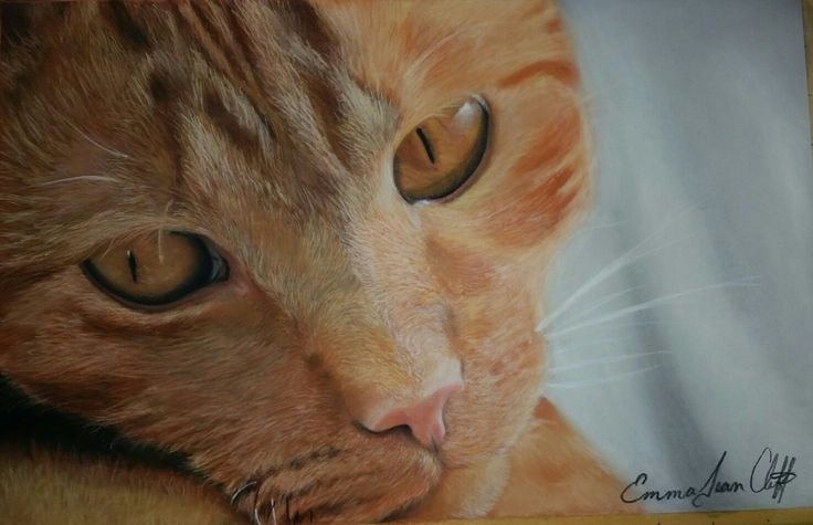 Ginger cat, Pastel on Clairfontain Pastelmat