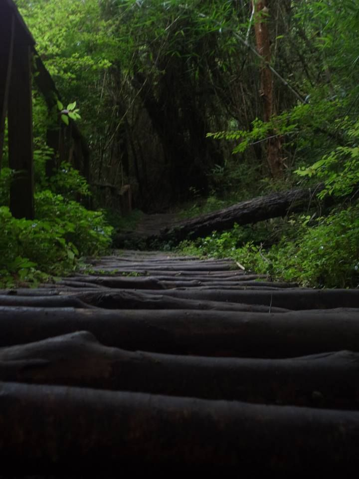 Parque Yayanes  CHILOÉ
