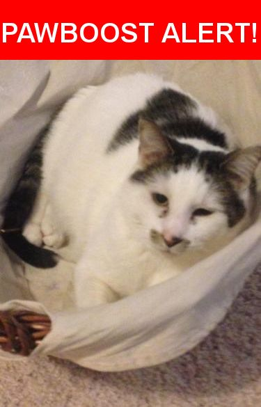 Please spread the word! Silly Cat was last seen in Eau Claire, WI 54701.    Nearest Address: Near Altoona Ave & Lee St
