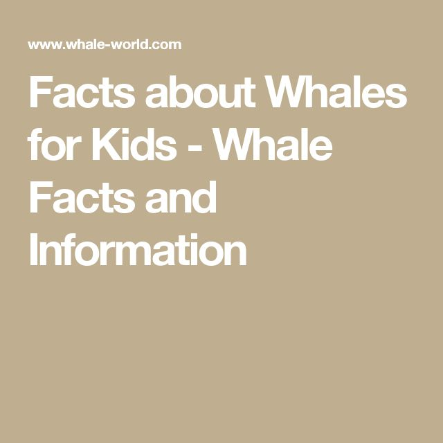 Facts about Whales for Kids - Whale Facts and Information
