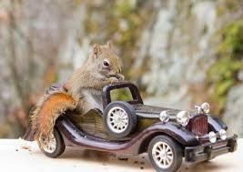 car squirrel pee on