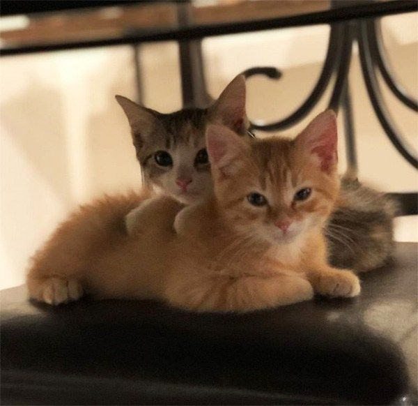 This Company Hired Two Office Kittens And Their Shenanigans