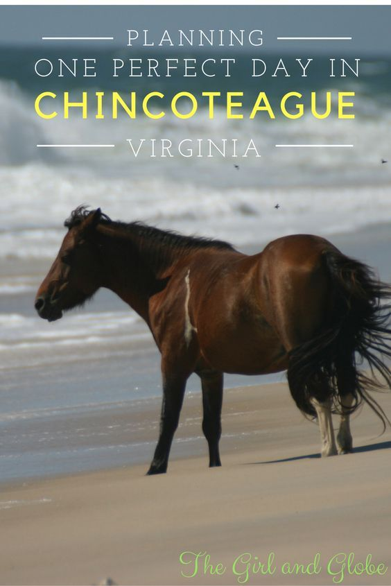 Only have one day in Chincoteague VA? Plan a perfect day in Chincoteague Virginia with tips on activities and restaurants. Biking, hiking, beaches, ponies, and more!