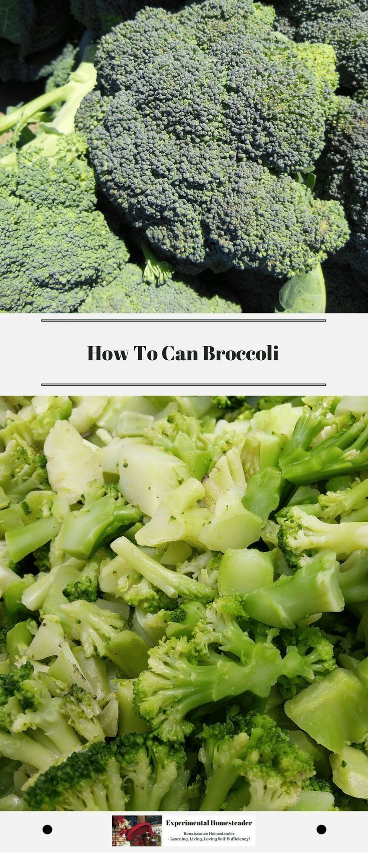 Looking for a recipe for canning broccoli? Here is one for pressure canning broccoli that is simple even for those just learning how to can. #canningbroccoli #pressurecanningbroccoli #canningvegetables #howtocan