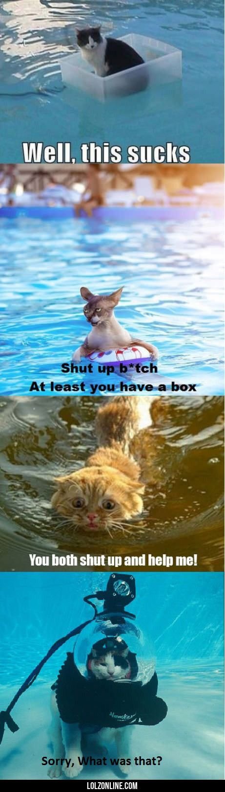 Cats vs. water… #lol #haha #funny