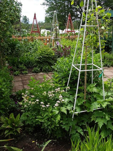 Vertical gardening - Jennings Park  Garden in Snohomish County, WA