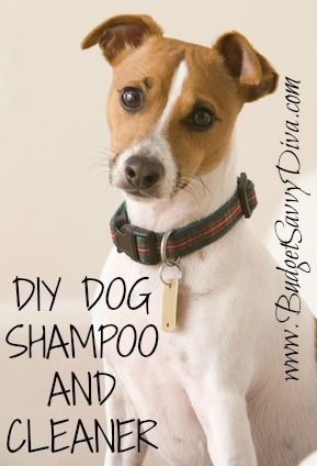 Simply take 1 cup dish soap, 1 cup white vinegar and 1 quart of warm water and mix. Make sure that it's all mixed up, and if you want to get fancy put in an old shampoo bottle, or just mix in with bath water for your dog and lather up that stinky puppy. Let it works it's magic for about five minutes, then rinse and enjoy a clean, odorless dog!