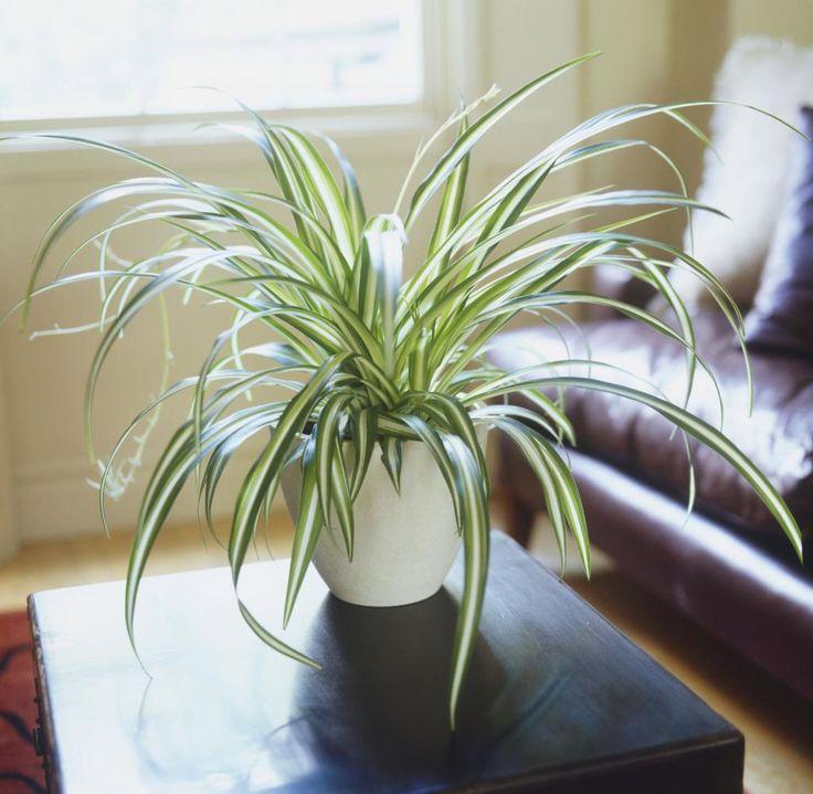 nasa empfiehlt diese 5 pflanzen reinigen die luft in deiner wohnung garten pinterest. Black Bedroom Furniture Sets. Home Design Ideas