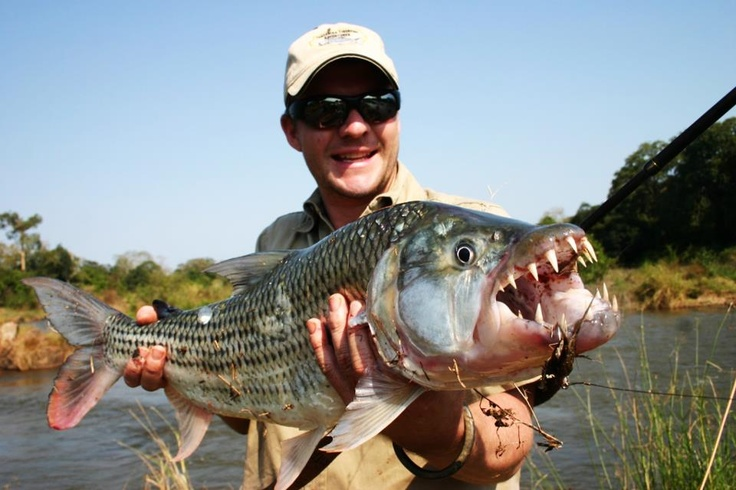 Image gallery huge freshwater fish for Large freshwater fish